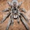 Chory kumak dalekowschodni---POMOCY! - ostatni post przez Ceratogyrus